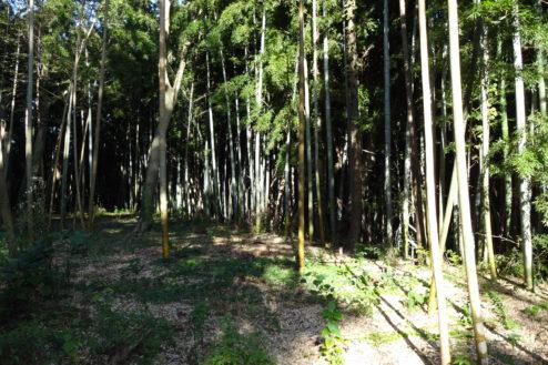 13.神社・集会所|竹林