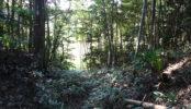 木が生茂る祠のある 裏山|祠・林