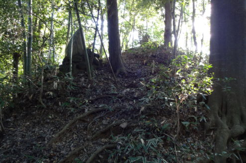 8.木が生茂る祠のある裏山