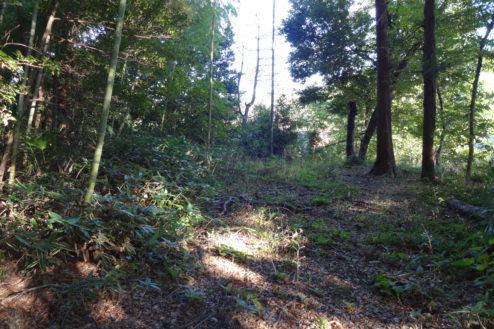 2.木が生茂る祠のある裏山