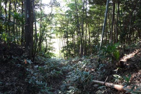 3.木が生茂る祠のある裏山