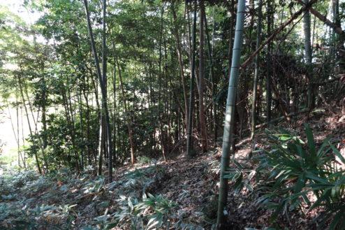 6.木が生茂る祠のある裏山