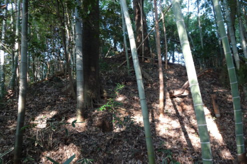 7.木が生茂る祠のある裏山