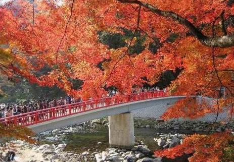5.街・古道・橋・夜景・公園・竹林|愛知・東海・北陸