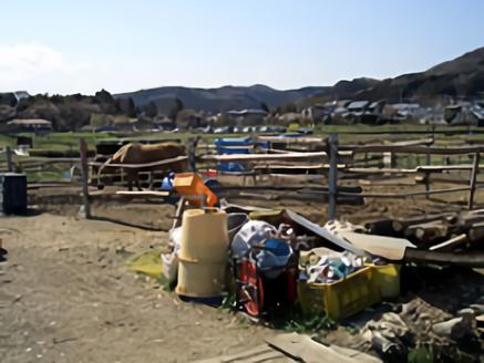 E日高市の牧場|放牧場