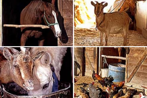 12.日高市の牧場|馬、ヤギ、鶏
