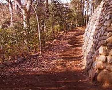 P神社|境内脇道