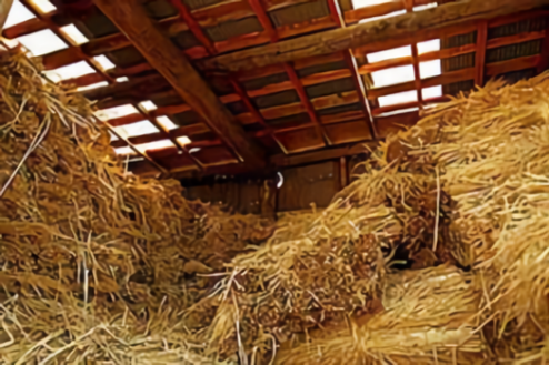 K日高市の牧場|牧草