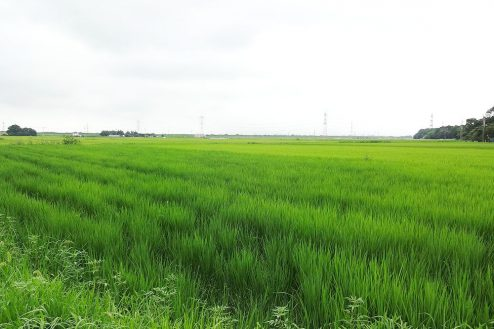 10.野田市の田園地帯|田園風景・林