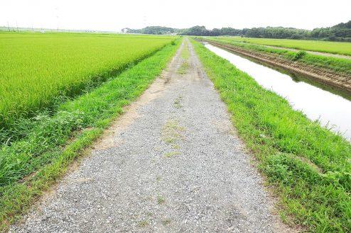 8.野田市の田園地帯|川の側道