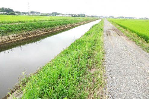 9.野田市の田園地帯|川の側道