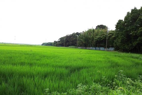 11.野田市の田園地帯|田園風景・林
