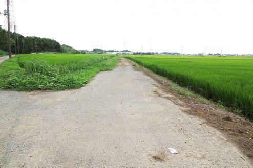 1.野田市の田園地帯|直線道路