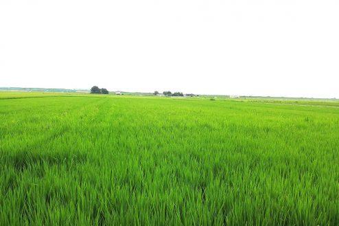 3.野田市の田園地帯|田園風景
