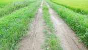 野田市の田園地帯|直線道路・あぜ道・川・田舎