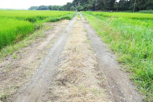 3.野田市の田園地帯|直線のあぜ道