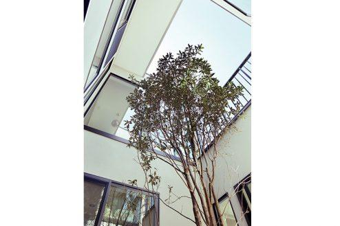 8.スタジオメゾン世田谷K邸|中庭
