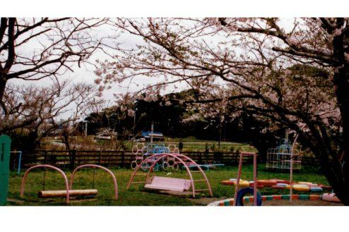 10.ゆうひが丘保育園|園庭・遊具