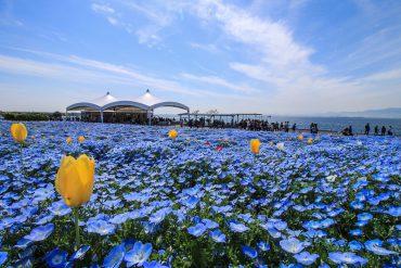 大阪まいしまシーサイドパーク(2030)|ネモフィラ・公園・海・24時間