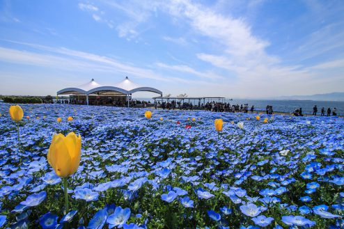 大阪まいしまシーサイドパーク|ネモフィラ・公園・海・24時間