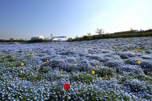 10.大阪まいしまシーサイドパーク|園内