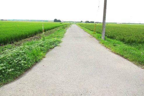 2.野田市の田園地帯|直線道路