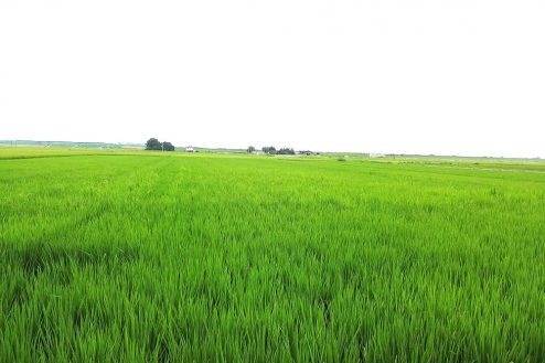 9.野田市の田園地帯|田園風景