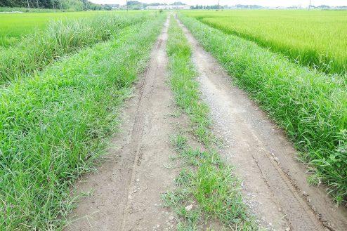 4.野田市の田園地帯|直線のあぜ道