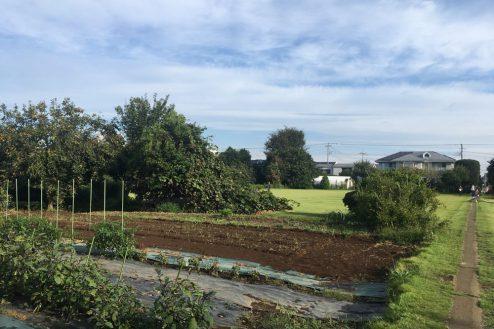 11.芝生スペース・家庭菜園|畑スペース