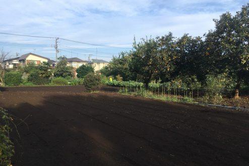 8.芝生スペース・家庭菜園|畑スペース
