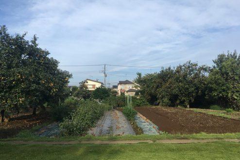 7.芝生スペース・家庭菜園|畑スペース
