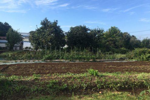 12.芝生スペース・家庭菜園|畑スペース