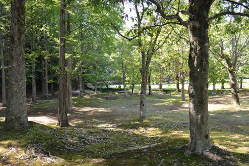 14.リソルの森|キャンプサイト・フォレストサイト